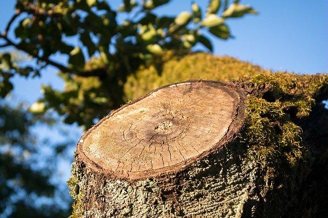 Was ist die beste Astsäge zum Schneiden von Bäumen und Streuchern?
