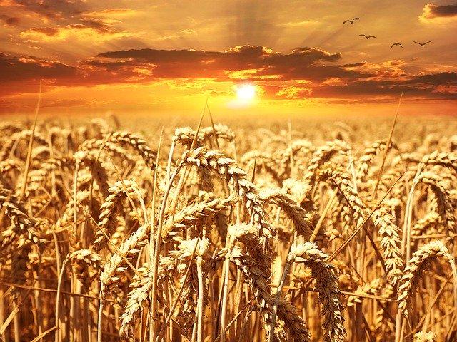 Was macht eine Getreidemühle mit dem Korn